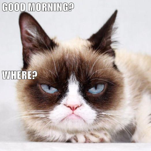 Good Morning Meme In Thursday