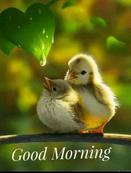 24 Good Morning Quotes