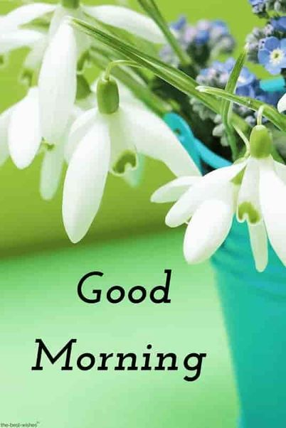 Amazing Collection of Good Morning