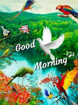 Good Morning Love footage For partner
