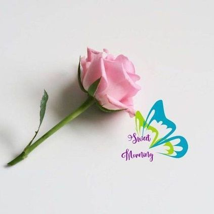 Good Morning Quotes and Wishes