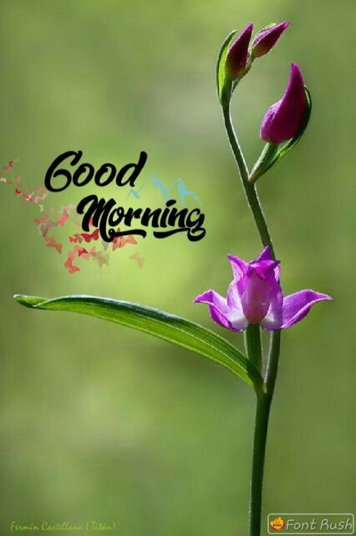 Good Morning pictures for Husband