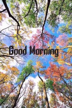 good morning exposure transfer in hd needs with text