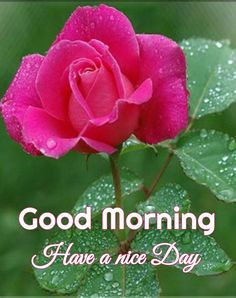 good morning nature leaf pictures transfer for friends