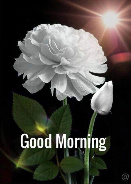 good morning pictures for whatsapp god radha Krishna transfer