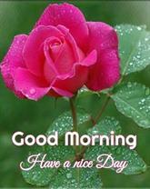 Happy Good Morning Vietnam Best Scenes 2020