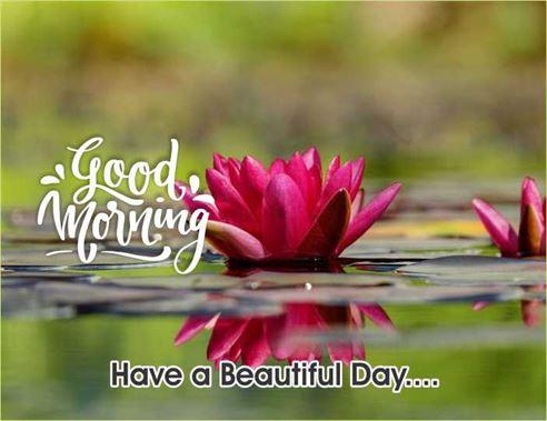 Good Morning Vietnam Greeting Free Images Wallpaper