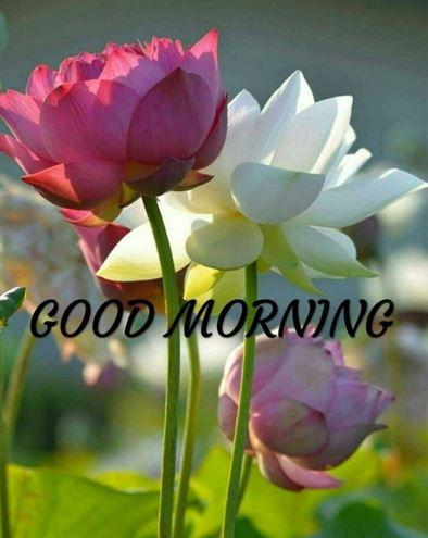 Good Morning Pics Gif