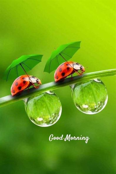 Happy Good Morning Pics 2020