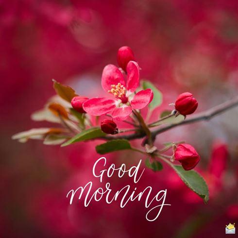 Best Good Morning Blingee Images